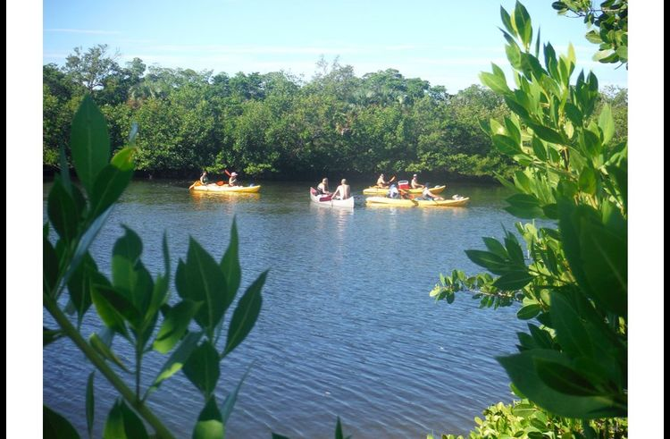 Kayak around Lover's Key and the Blue Calusa